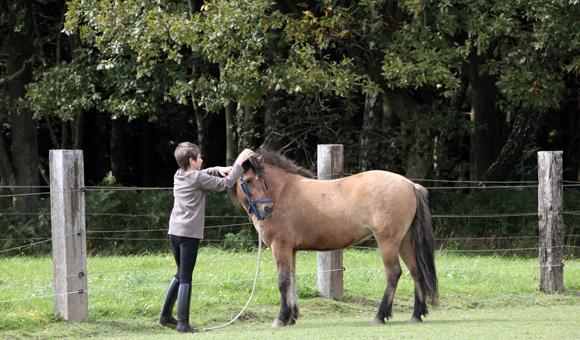 Der Kontakt zum Pony muss stimmen