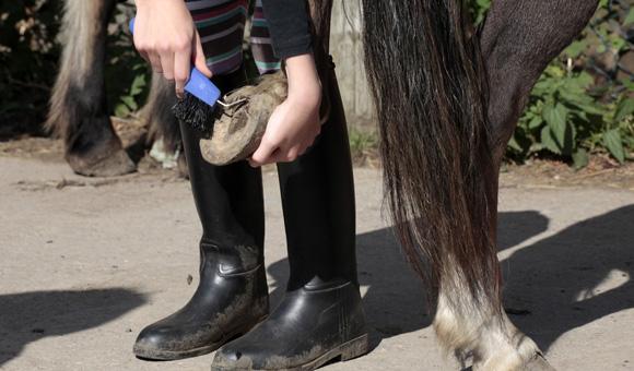 Auch die richtige Pflege des Ponies will gelernt sein.