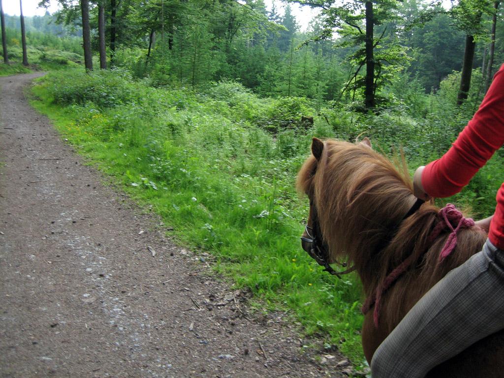 Ausritt im Wald