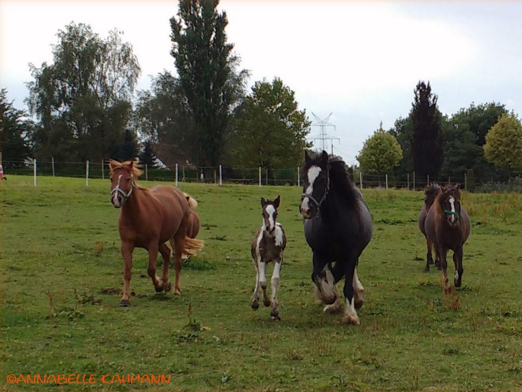 Endlich darf Celli über die Weide rennen!